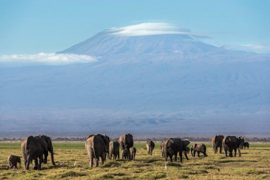 A herd of elephants with Mount Kilimanjaro in the background