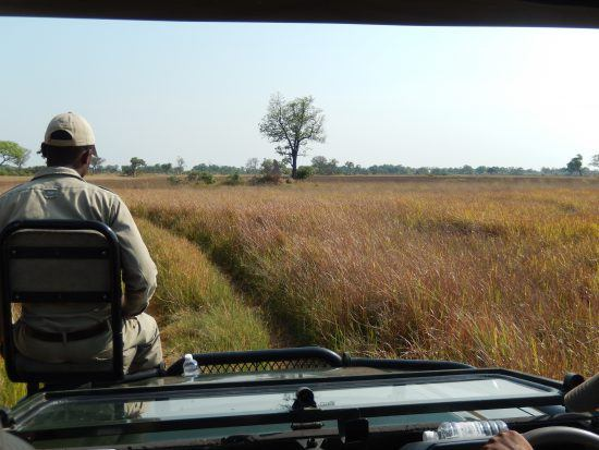A view from the safari 4x4