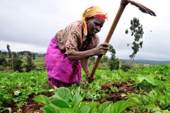 Eine Farmarbeiterin in der Mount-Kenya-Region