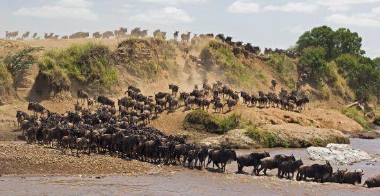 A Grande Migração dos Gnus, Tanzânia