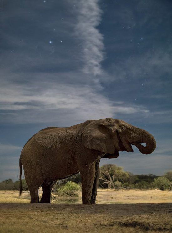 Elefant im Hwane Nationalpark