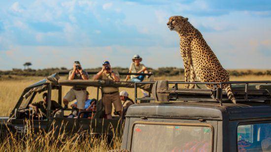 Gepard auf Geländefahrzeug