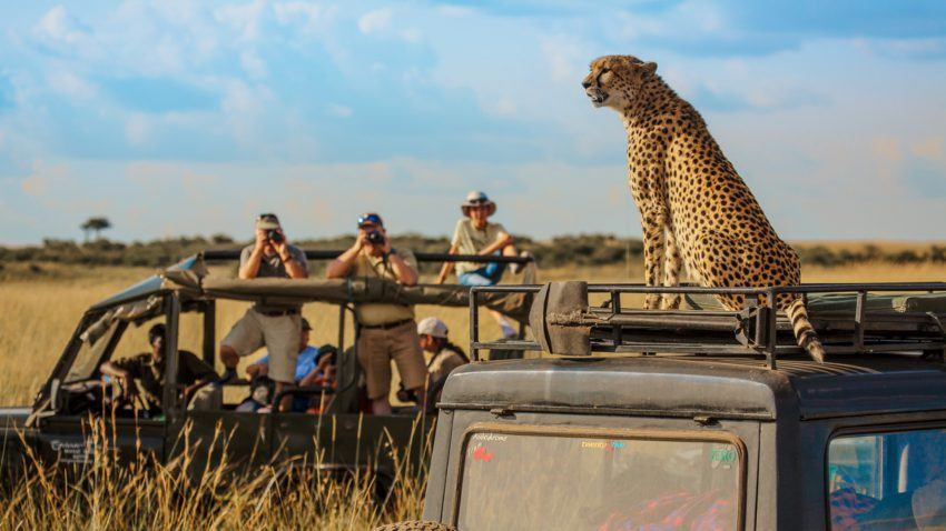 Best Places To See Endangered Animals In Africa | Rhino Africa