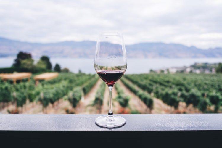 ¡Ven a catar vino en los Viñedos del Cabo!