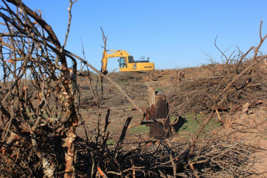 Gelbe Waldmaschine walzt Bäume nieder