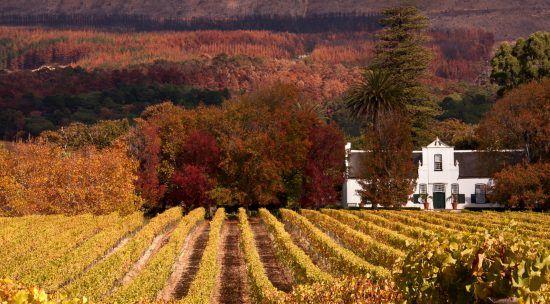 Weinfarm im Herbst
