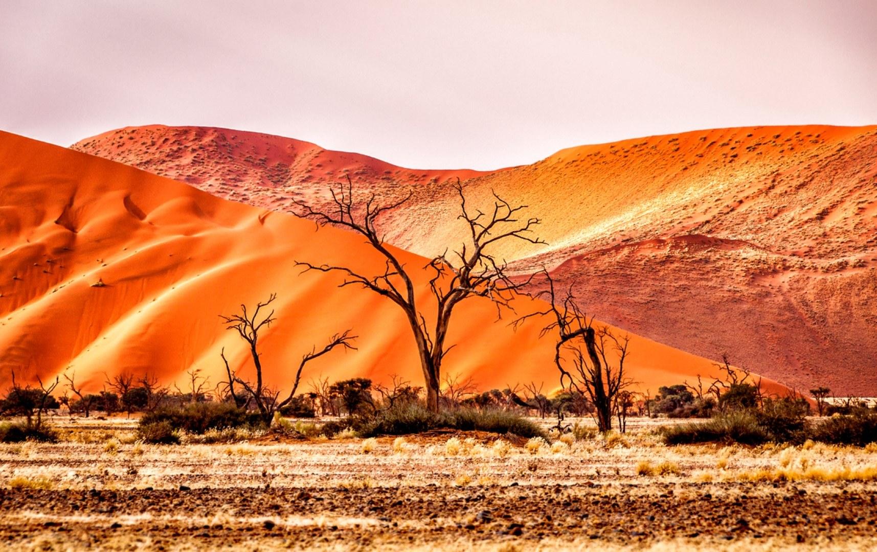 Die einzigartige Namib