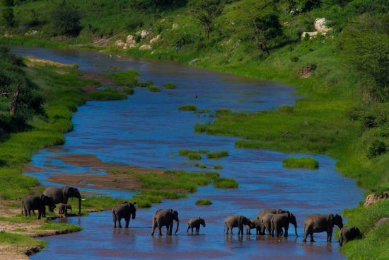 Elefanten bei Flussüberquerung