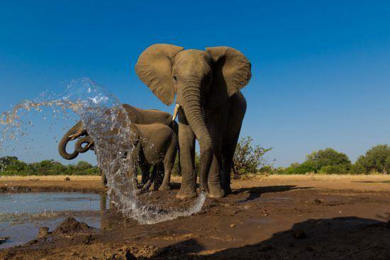 Elefanten spritzen Wasser