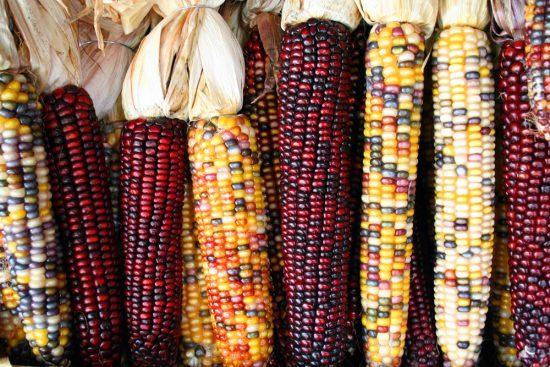 Maiskolben in rot und gelb
