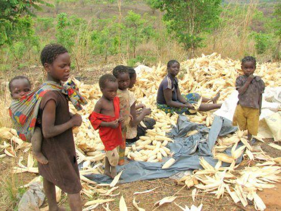 Frauen und Kinder schälen Mais im Freien