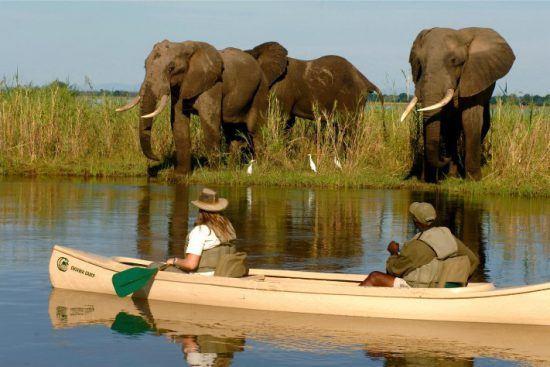 Mann und Frau beobachten aus einem Kanu auf dem Sambesi eine Herde von Elefanten am Flussufer