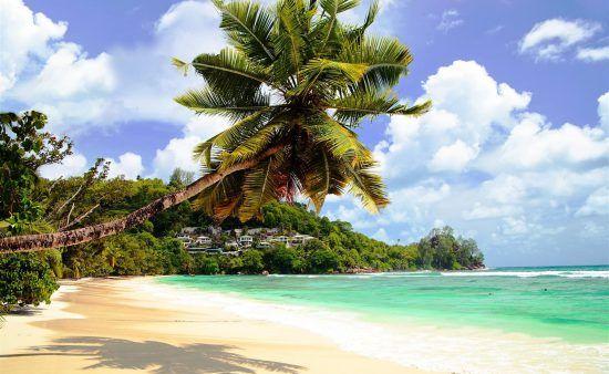 Traumhafter Strand mit Palme am türkisblauen Meer in den Seychellen