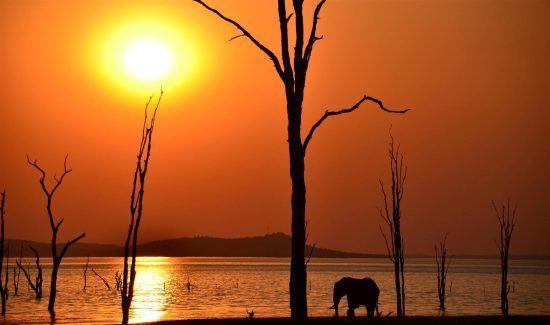Elefant bei Sonnenuntergang am Lake Kariba
