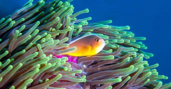 Korallenriff Mosambik