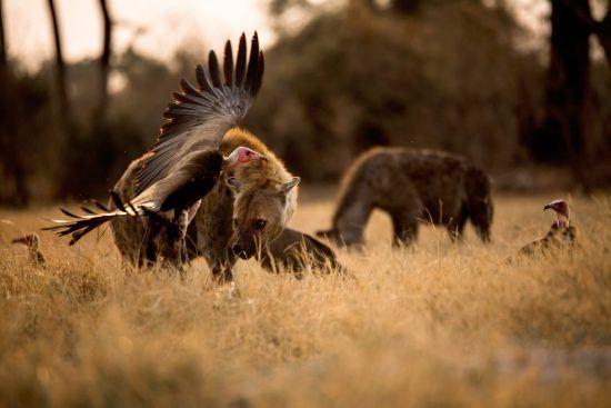 Emocionantes escenas de la vida salvaje