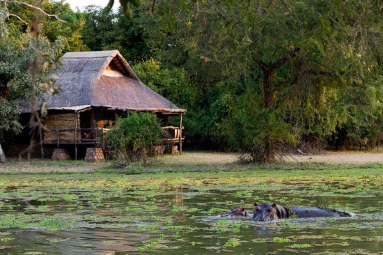 Flusspferde im Wasser direkt vor der Mfuwe Lodge in Sambia