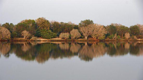 Bäume spiegeln im Sambesi-Fluss