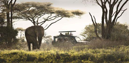 on safari with serengeti under canvas in the Serengeti national park Tanzania