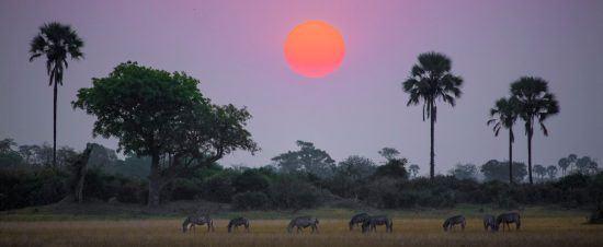 Atardecer africano cayendo sobre cebras
