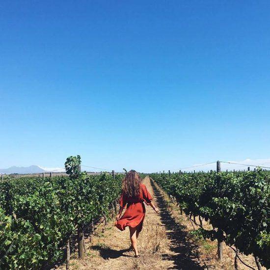 Os vinhedos de Spier, uma das vinícolas mais adoradas da Cidade do Cabo