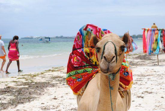 A camel on a beach in Kenya