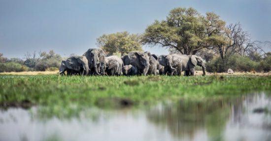 Eine Elefantenherde zwischen Wasser und fruchtbarer, grüner Graslandschaft