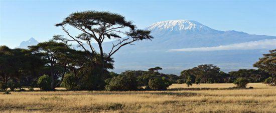 Landschaft des Amboseli Nationalparks mit schneebedecktem Kilimanjaro im Hintergrund