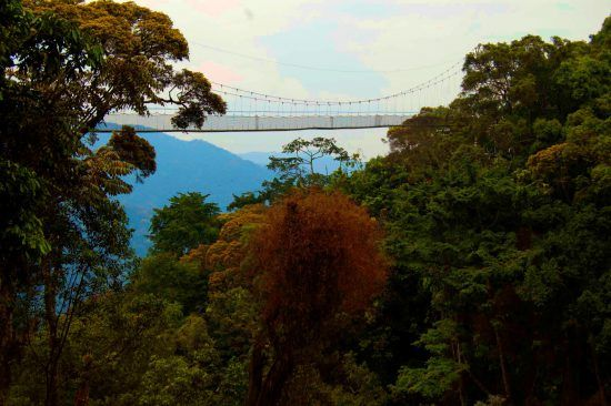 Nyungwe Forest National Park is a tropical rainforest with a large biodiversity of flora and fauna