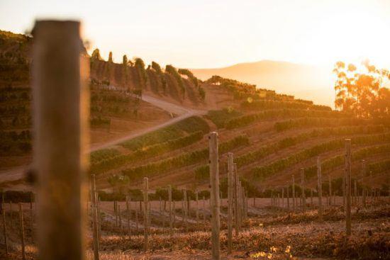 Les vignobles du Cap au coucher du soleil