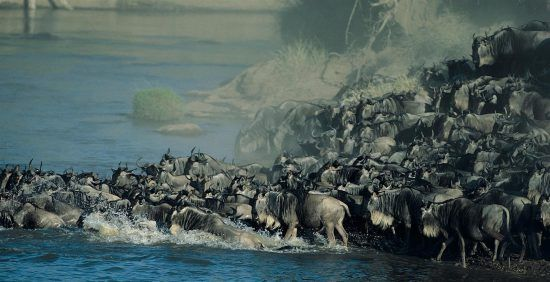 Uma travessia de rio cheia de ação no Serengeti