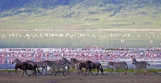 Zebras und Flamingos am See