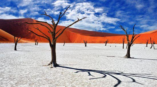 Tote Bäume vor den roten Dünen im namibischen Sossusvlei