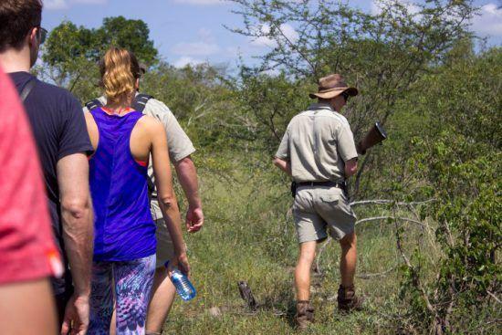 Eine Gruppe folgt einem Ranger mit Waffe durch den Busch - Lukimbi Safari Lodge