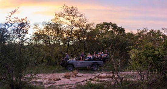 Eine Gruppe in einem Safari-Fahrzeug beobachtet ein Löwenrudel mit Nachwuchs vor einem malerischen Sonnenuntergang
