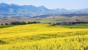 L'expropriation des terres en Afrique n'a pas de conséquences sur le tourisme et les voyageurs
