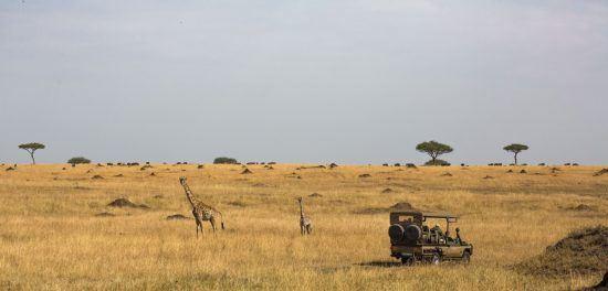 Geländefahrzeug in der Savanne mit Giraffen