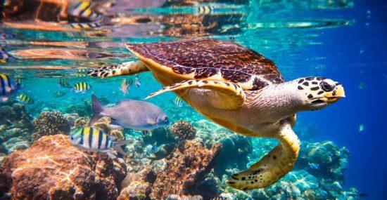 Eine Meeresschildkröte schwimmt durch eine bunte Unterwasserwelt