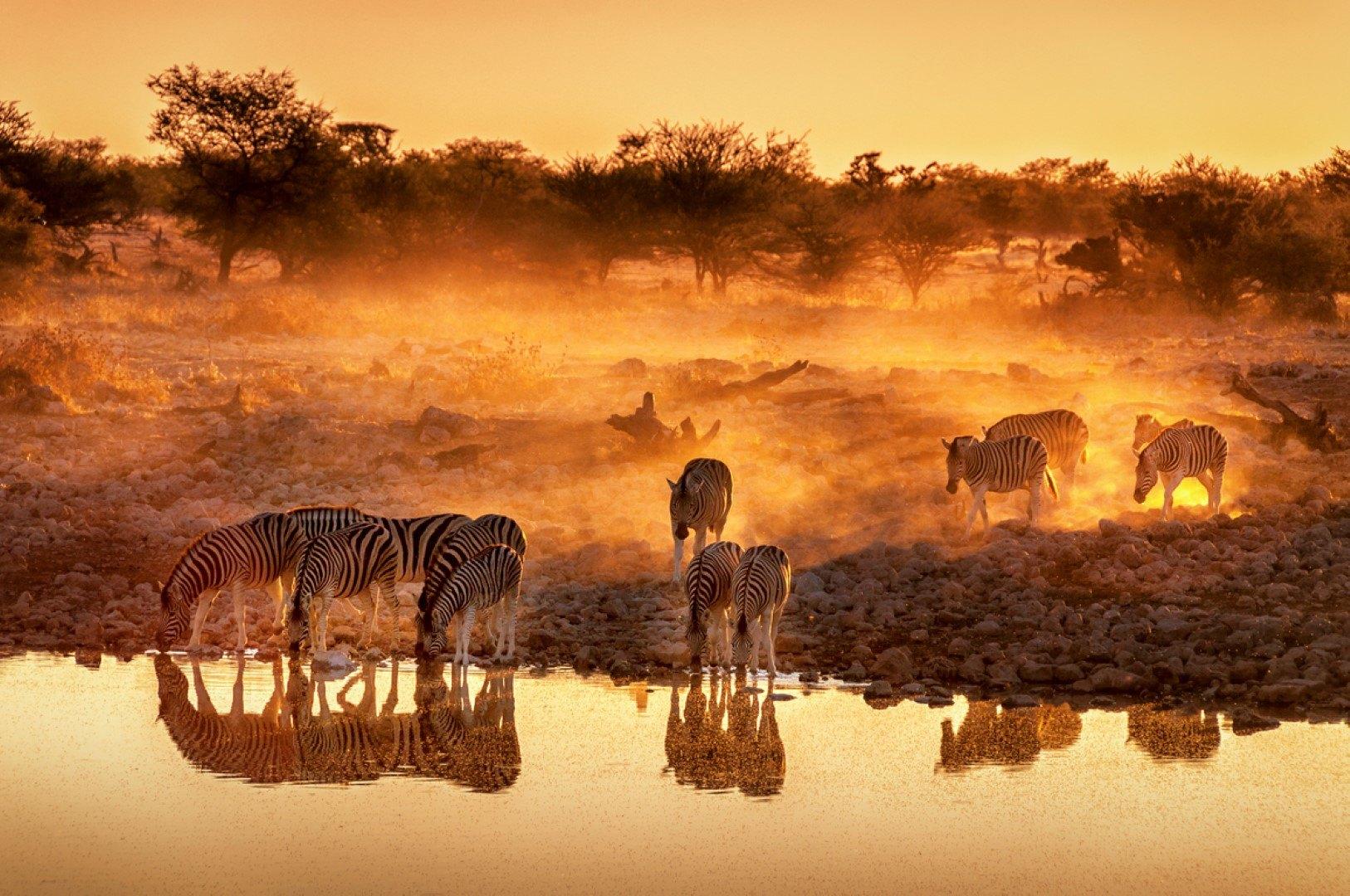 Zebras am Wasserloch bei Sonnenuntergang