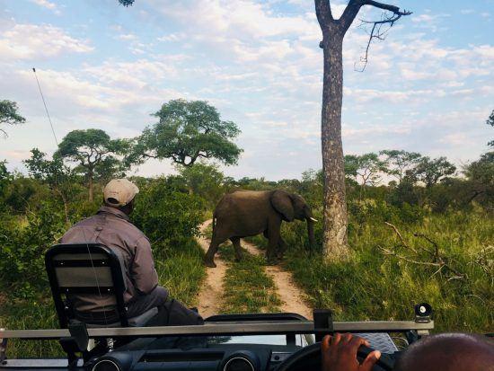 Ranger und Tracker auf dem Geländewagen in der Wildnis