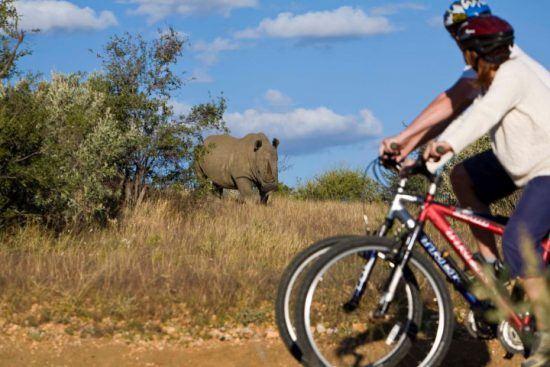 Mann und Frau auf einem Mountainbike im afrikanischen Busch beobachten ein Spitzmaulnashorn