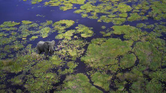 Vue aérienne d'un éléphant dans les eaux du Botswana