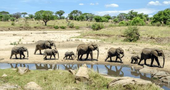 Elefantes são marca registrada do Tarangire