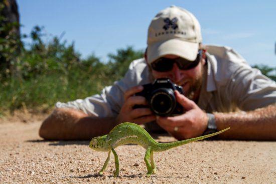 Ein Mann liegt im Sand und fotografiert ein grünes Chamäleon