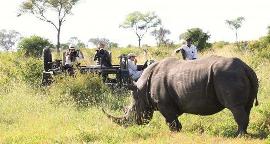 Nashorn in der Savanne mit Safari-Reisenden im Hintergrund