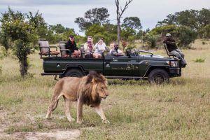 Menschen in einem offenen Geländewagen sehen einen männlichen Löwen