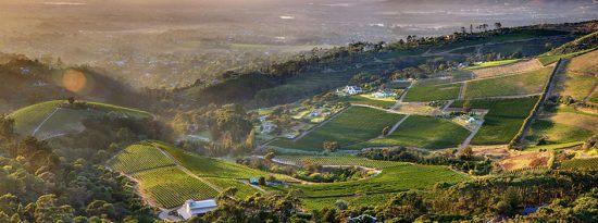 Weinfarm bei Kapstadt: Constantia Glen aus der Vogelperspektive