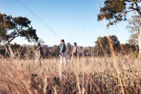 Zwei Urlauber sind mit einem bewaffneten Guide im hohen Gras des Buschs unterwegs