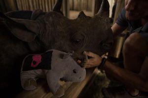 Wildlife ACT trabaja para salvar el rinoceronte negro