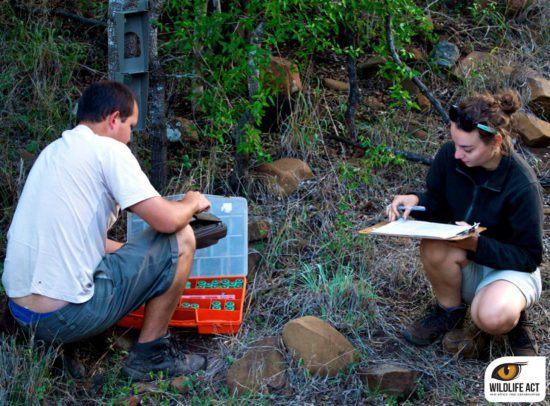 La monitorización es una de las actividades clave de Wildlife ACT